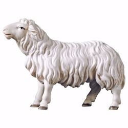 Picture of Sheep looking forward cm 10 (3,9 inch) hand painted Ulrich Nativity Scene Val Gardena wooden Statue baroque style