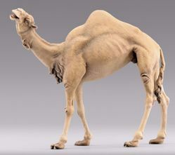 Picture of Camel standing cm 30 (11,8 inch) Immanuel dressed Nativity Scene oriental style Val Gardena wood statue