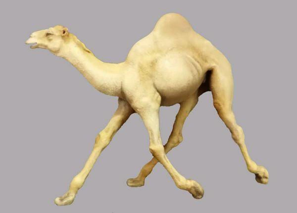 Imagen de Camello que corre cm 30 (11,8 inch) Pesebre vestido Immanuel estilo oriental estatua en madera Val Gardena